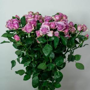 Кустовые розы цена